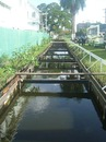 The moat outside Bourda, ICC World Twenty20, Guyana, May 1 2010