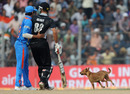Suresh Raina and Grant Elliott watch a dog interrupt play