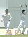 Brendan Taylor and Regis Chakabva are delighted at the fall of Marlon Samuels, West Indies v Zimbabwe, 1st Test, Barbados, 2nd day, March 13, 2013