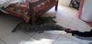 Look what's under the bed: Guy Whittall had an unexpected guest, September 17, 2013