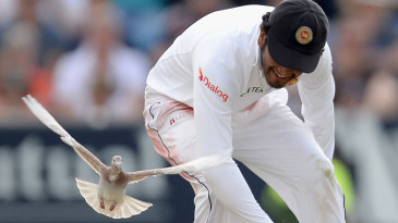 Catch the pigeon: Dimuth Karunaratne isn't quite quick enough