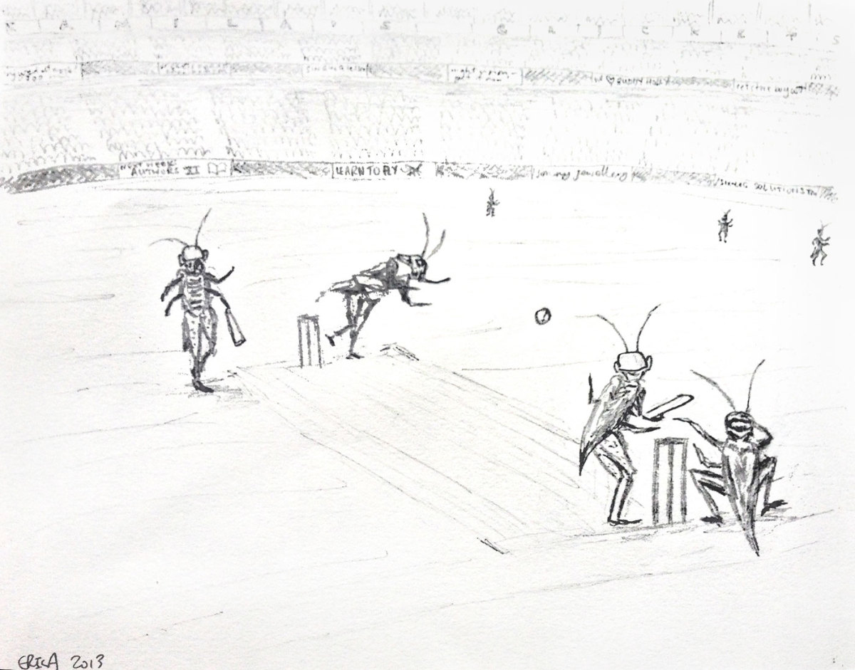 Crickets playing cricket