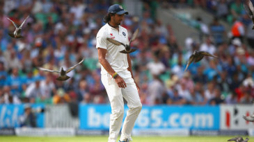 Ishant Sharma tries to chase the pigeons away
