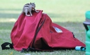 A squirrel at play during West Indies' training session, Delhi, October 14, 2014
