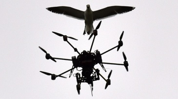 A seagull flies over a drone carrying a camera at Basin Reserve