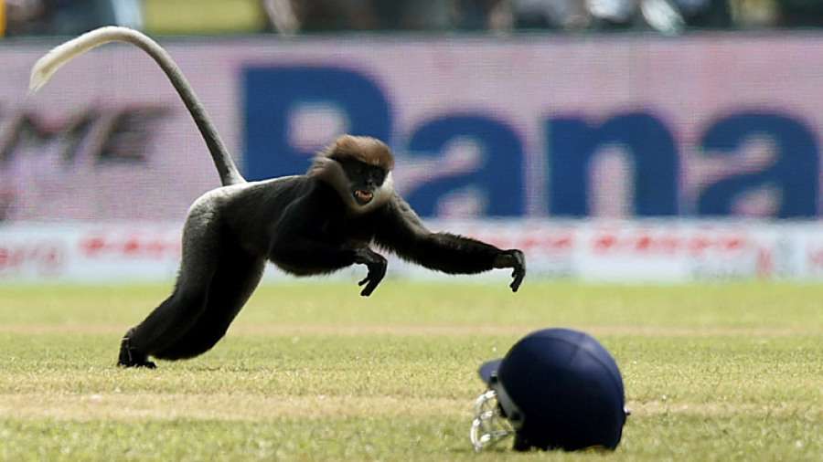 Play was halted by a rather unusual intruder - a monkey