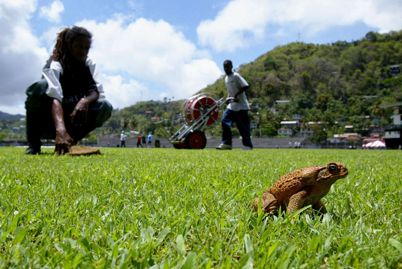 Blogs Clickbait Animals On The Cricket Field Cricket