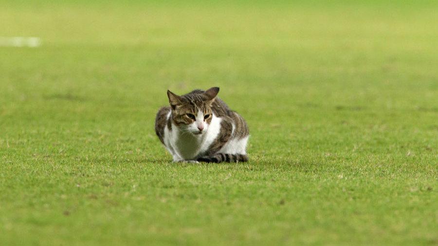The Sharjah Cricket Stadium had a feline visitor