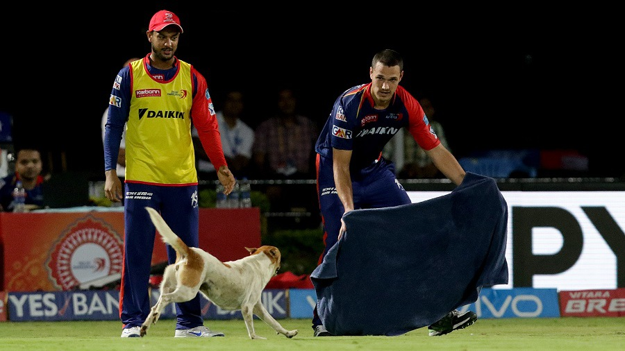 Nathan Coulter-Nile tries to lure a dog out of the field after it interrupts play