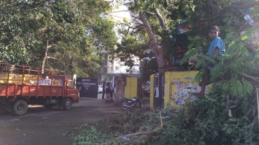 Uprooted Trees in front of the gate at MA Chidambaram stadium