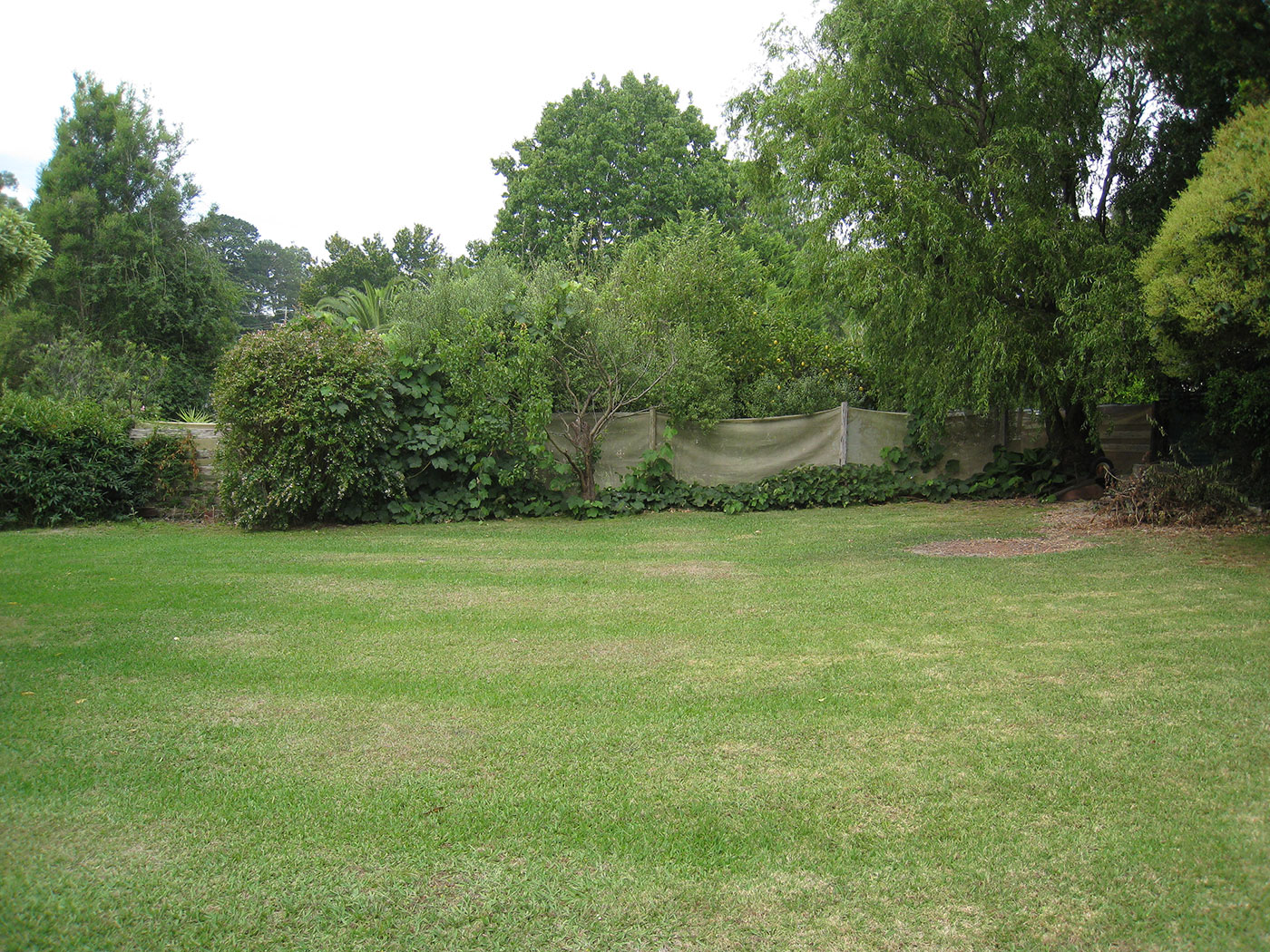 The bowler's-end view of the Maxwell family backyard