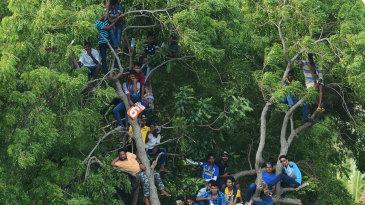 Fans found viewing spots on trees in Dambulla