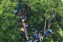 A tree-top platform to view cricket