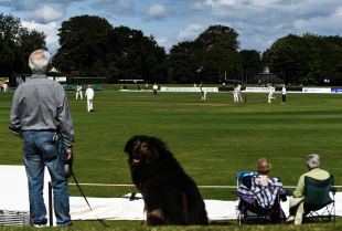 Walk in the park: A spectator with his dog at the Ireland-Netherlands game