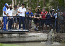 Crunch time: Alastair Cook feeds a crocodile at a wildlife sanctuary, Townsville, November 13, 2017