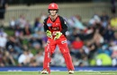 Melbourne Renegades wicketkeeper Sam Harper in action, Hobart Hurricanes v Melbourne Renagades, BBL 2019, Hobart, February 07, 2019