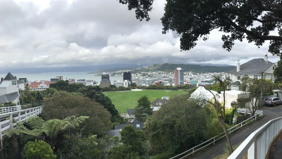 A view of Wellington from the Botanic Garden
