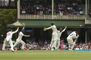 Australia celebrate as Tim Paine catches Glenn Phillips, Australia v New Zealand, 3rd Test, Sydney, 4th day, January 6, 2020