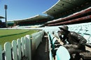 The sculpture of Yabba by itself as play goes on, Australia v New Zealand, 1st ODI, Sydney, March 13, 2020