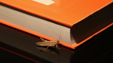 A cricket next to a book