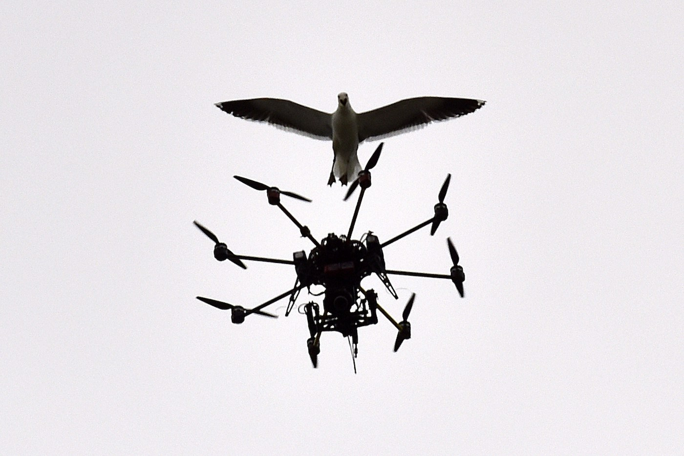 Playing in a stadium near you: the drone wars, starring Steven Seagull