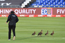 Umpire Adrian Holdstock chases a family of geese off the Newlands outfield, South Africa v England, 1st T20I, Cape Town, November 27, 2020
