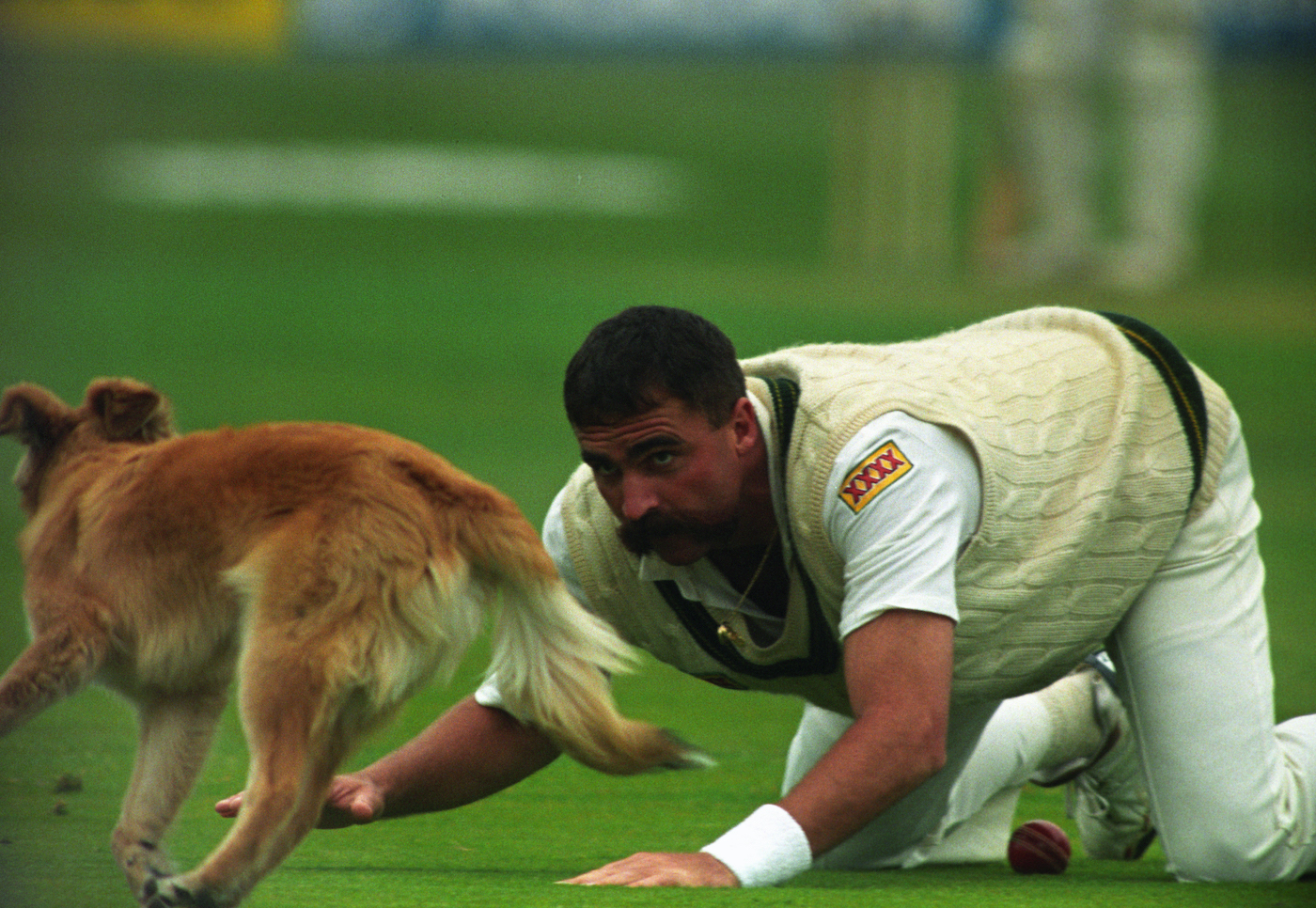 Merv Hughes knows cricket can be a dog-eat-dog game